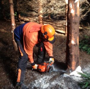 Forestry First Aid
